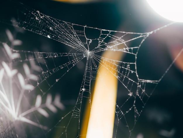 Teia de aranha sob uma lâmpada dentro de macro