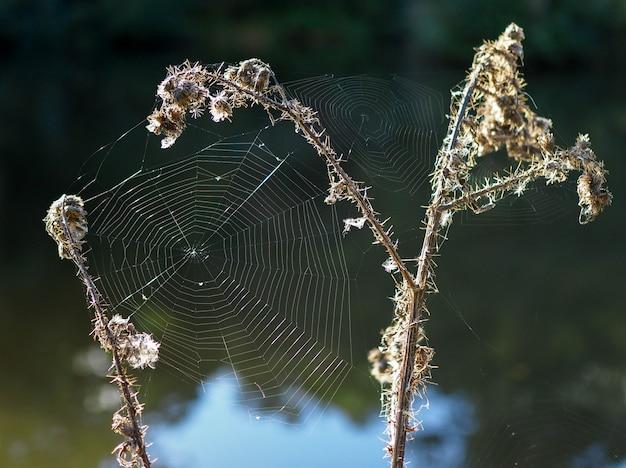 Teias de aranha no campo de sussex