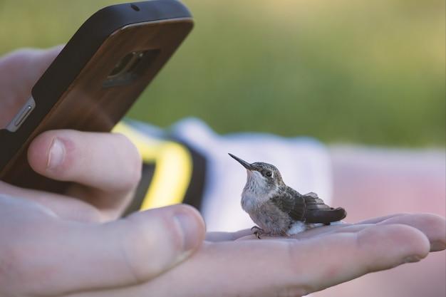 Telefone tirando uma foto de um pequeno beija-flor em uma mão humana