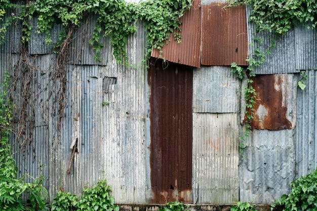 Telhado de folha de metal velho rust com planta de folha verde