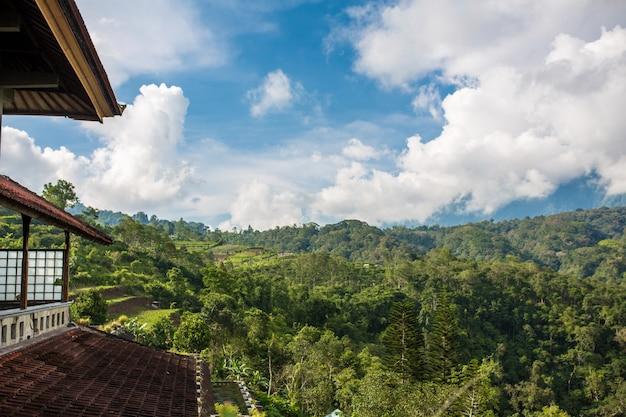 Telhado do edifício na densa selva verde