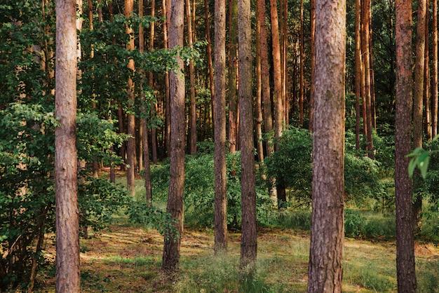 Tema da floresta natural, fundo da árvore