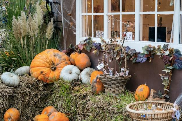Tema de decoração de outono em um jardim público ao ar livre, abóboras assustadoras no chão.