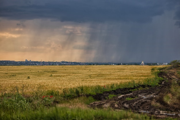 Tempestade sobre um campo de trigo amarelo, uma estrada rural suja e estrias de chuva no horizonte acima do campo