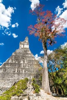 Templo do grande jaguar em tikal. patrimônio mundial da unesco na guatemala