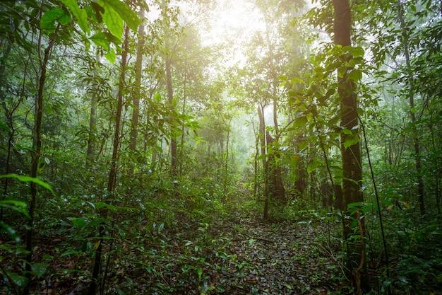Tempo nevoento da paisagem tropical da floresta úmida no parque nacional de phuhinrongkla em phitsanulok,