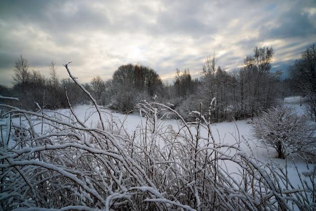 Tempo sombrio na floresta de inverno.