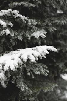 Temporada de inverno com folhas congeladas
