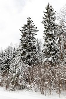 Temporada de inverno do ano na floresta