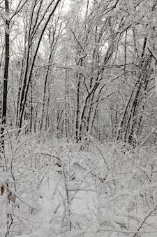 Temporada de inverno na floresta ou no parque com árvores nuas, árvores de folha caduca sem folhagens na neve após nevascas e nevascas