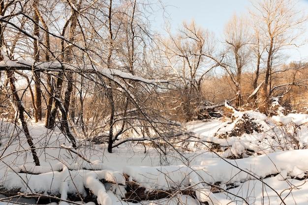 Temporada de inverno na floresta