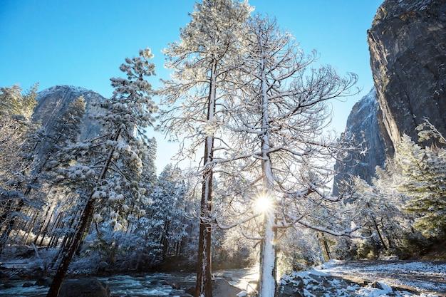 Temporada de inverno no parque nacional de yosemite, califórnia, eua