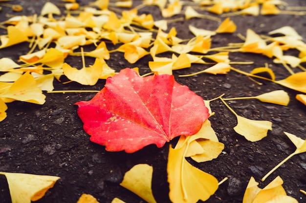 Temporada de outono de árvore e folhas
