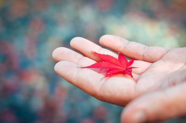 Temporada de outono de árvores e folhas no japão