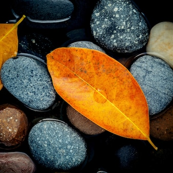 Temporada de outono e conceitos pacíficos. folha alaranjada na pedra do rio.