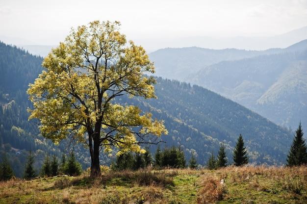 Temporada de outono nas montanhas. árvore sozinha. cárpatos, ucrânia. vista majestosa.