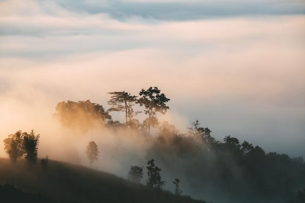 Temporada de viagens de inverno, bela paisagem de nevoeiro na montanha ao nascer do sol no mirante yun lai, pai, mae hong son, tailândia