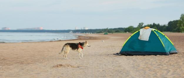 Tenda em uma praia arenosa perto da água