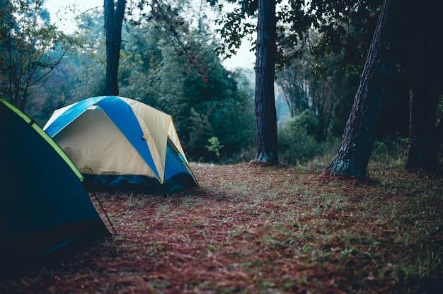 Tendas e alojamento de turistas. dormindo na floresta no inverno
