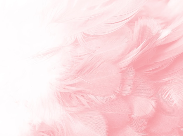 Tendências de cor vintage rosa coral fundo de textura de penas