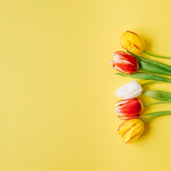 Tender tulipas na superfície amarela