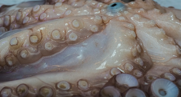 Tentáculos do polvo