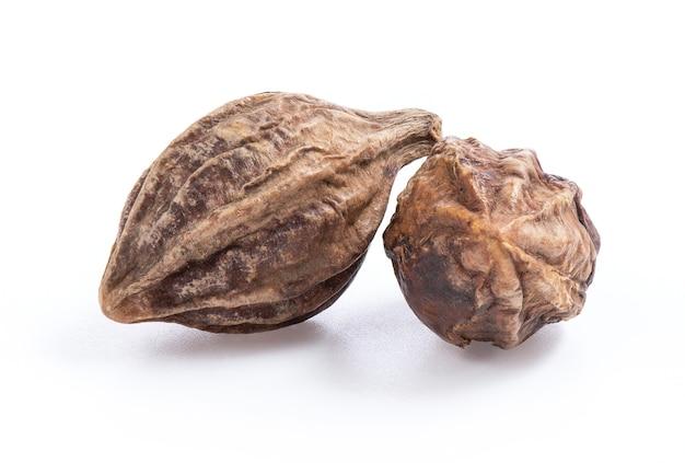 Terminalia arjuna roxb frutas secas isoladas brancas