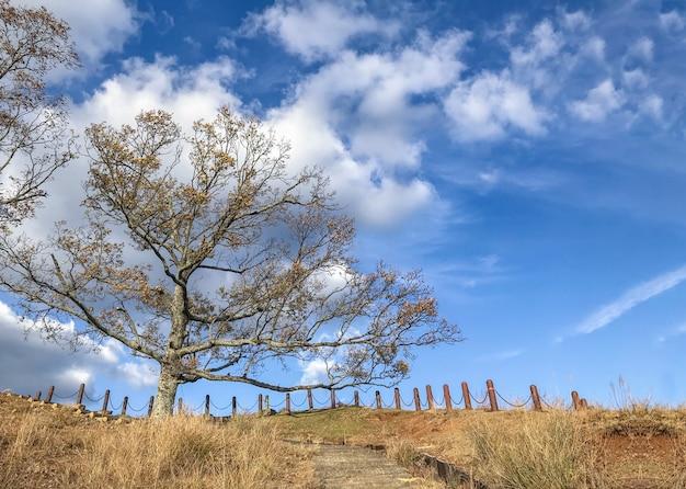 Terra do parque de grama seca e árvores com céu azul como pano de fundo