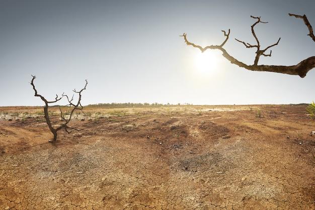 Terra rachada com grama dan árvore seca