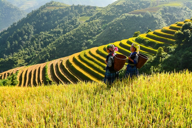 Terraço de arroz durante o pôr do sol, região nordeste do vietnã