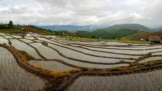 Terraço de arroz e homestay em chiangmai tailândia