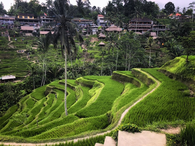 Terraço do arroz de tegallalang, ubud, bali