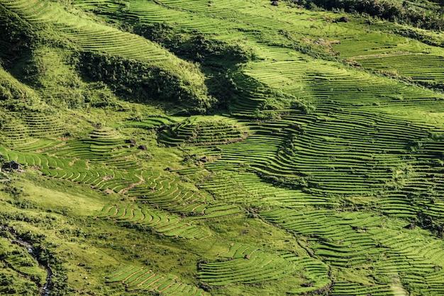 Terraços bonitos do campo do arroz em sapa vietname.