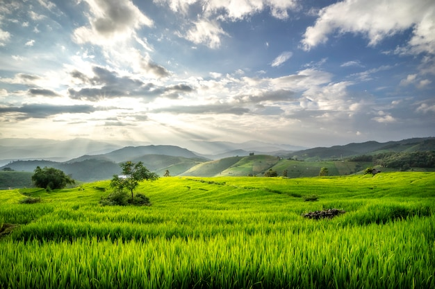Terraços campos de arroz na montanha na tailândia