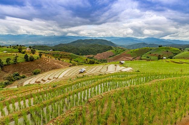 Terraços de arroz pa bong piang na estação chuvosa, chaingmai, tailândia