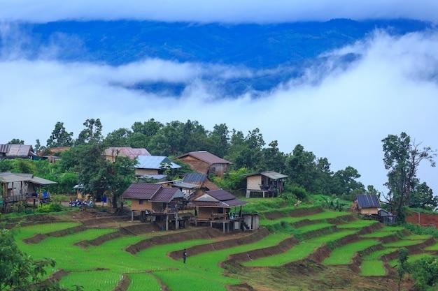 Terraços de arroz verde de férias na vila de pa bong paing, mae-jam chiang mai, tailândia