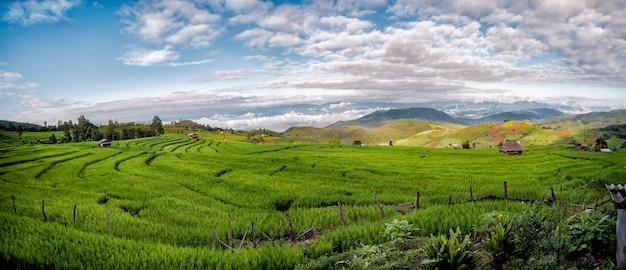 Terraços do arroz do pa bong piang em chiang mai, tailândia, vista panorâmico