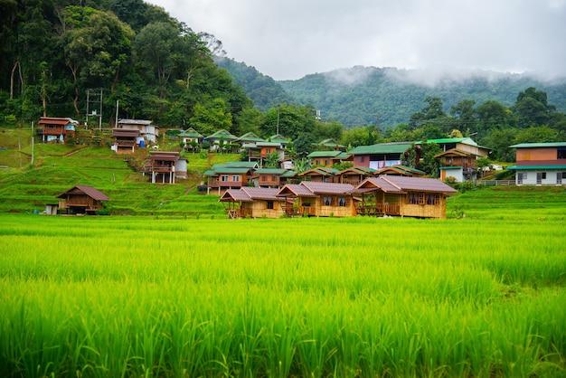 Terraços do campo do arroz em mae klang luang, homestay chiangmai, tailândia