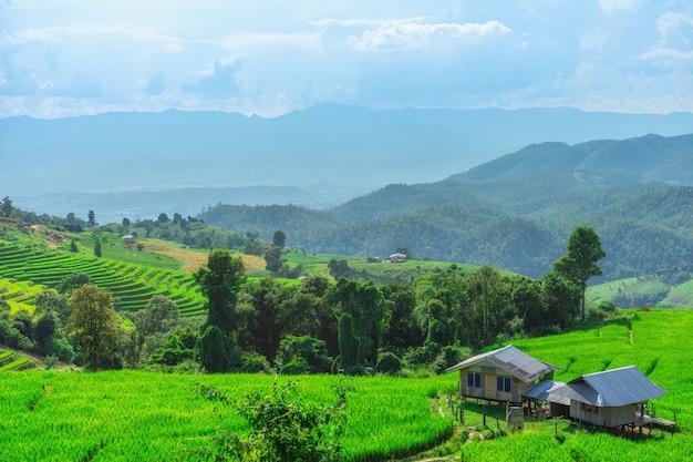 Terraços do pa bong piang rice em mae chaem, chiang mai, tailândia.