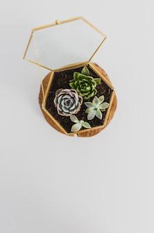 Terrário de plantas suculentas