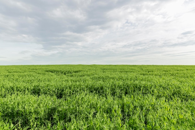 Terras agrícolas na zona rural