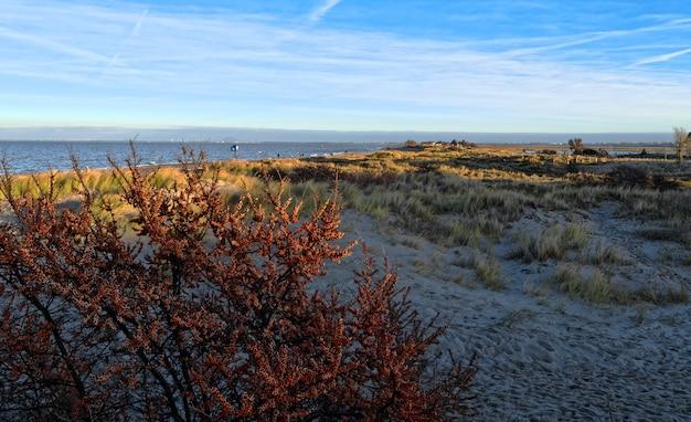 Terreno com muitos arbustos perto do mar e céu nublado