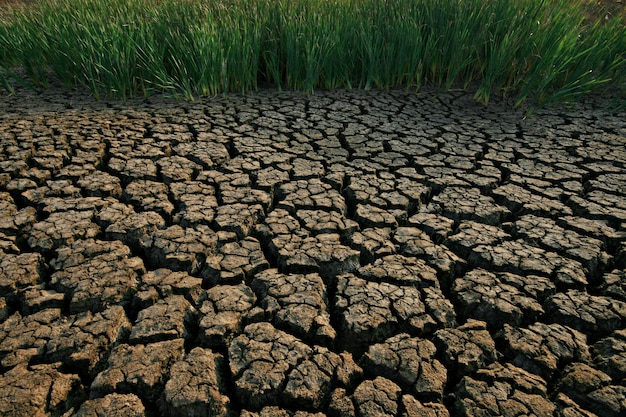 Terreno com solo seco e rachado