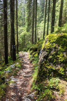 Terreno rochoso nas montanhas dos cárpatos