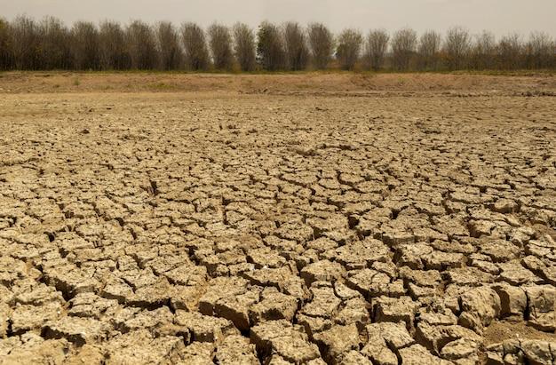 Terreno seco da ecologia e do meio ambiente