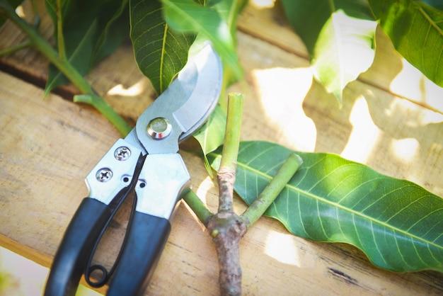Tesouras de poda na agricultura de jardins