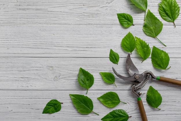 Tesouras de podar um jardim e folhas verdes em um fundo de madeira rústica branca