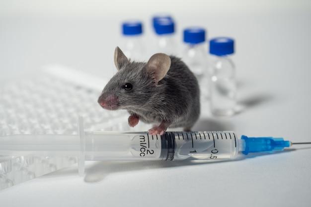 Teste de vacina em ratos de laboratório