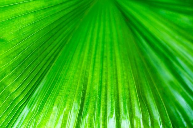 Teste padrão abstrato na folha fresca de palmeira texturizado espaço closeup