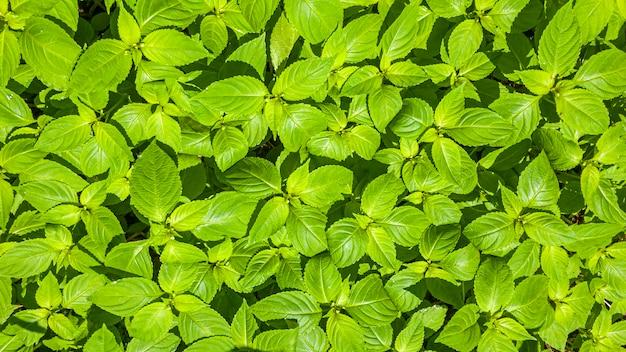 Teste padrão botânico com lindas folhas verdes frescas para design e papel de parede.